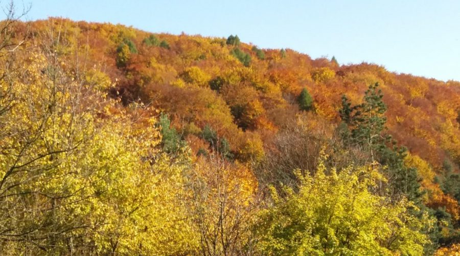 polish jura in autumn