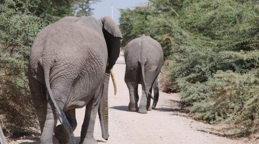 kenia safari zwarszawy