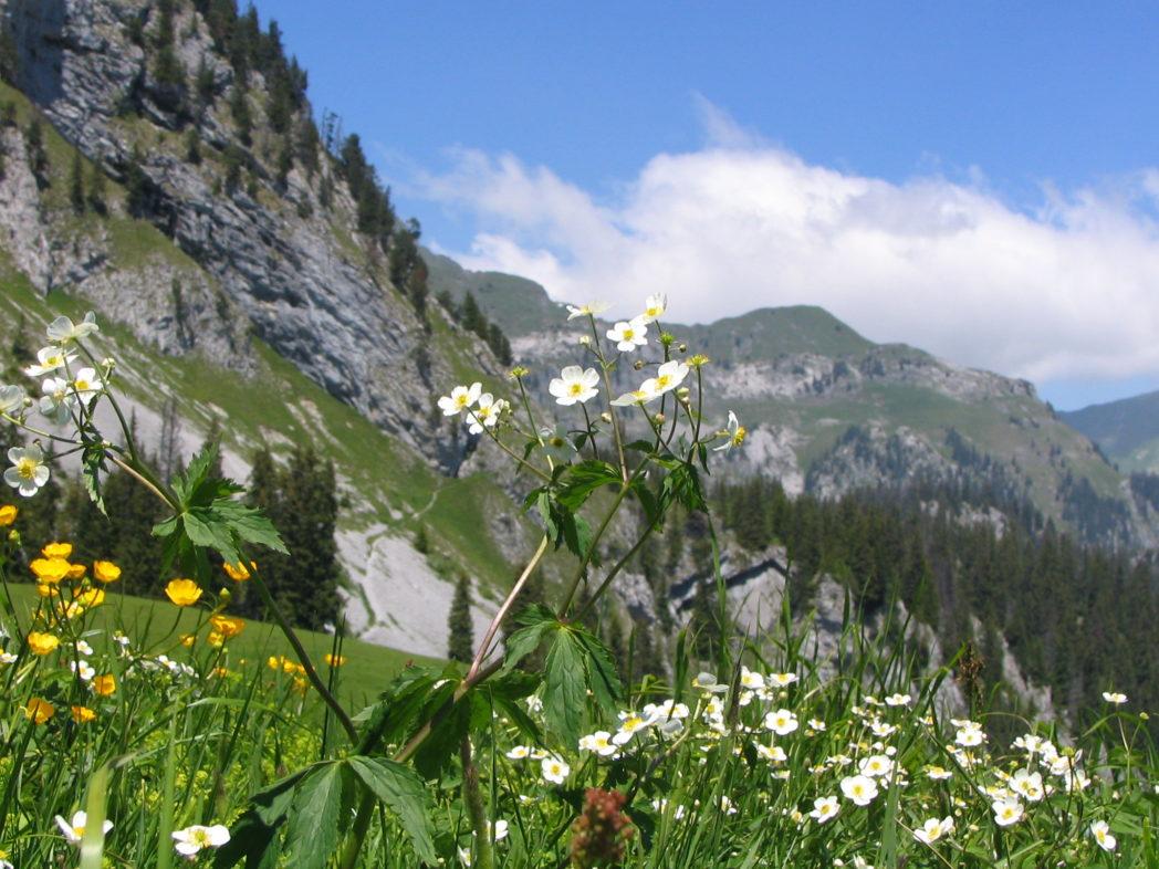 dobre wycieczki szwajcaria