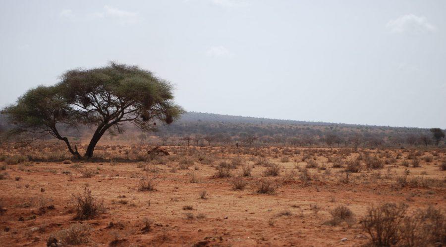 krajobraz Kenii podczas powrotu zsafari wparku Amboseli doMombassy.