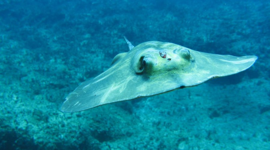 nurkowanie cypr