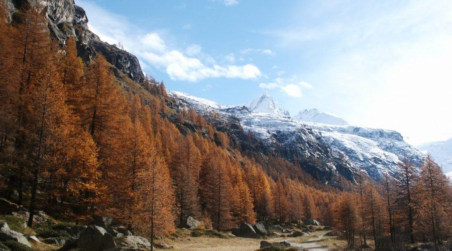 bogata oferta natanie apartamenty wewłoskich Alpach