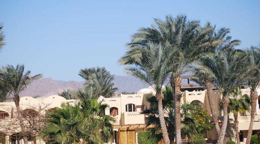 słoneczna pogoda podczas lutowego pobytu wEgipcie naPółwyspie Synaj