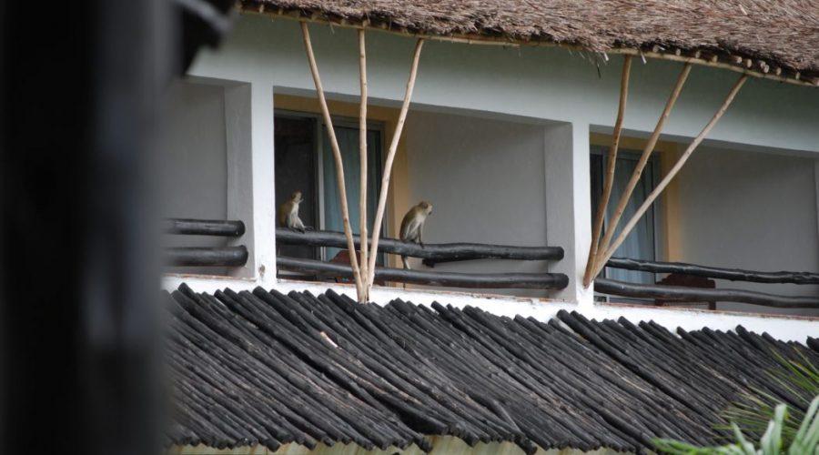hotele kolo mombasy