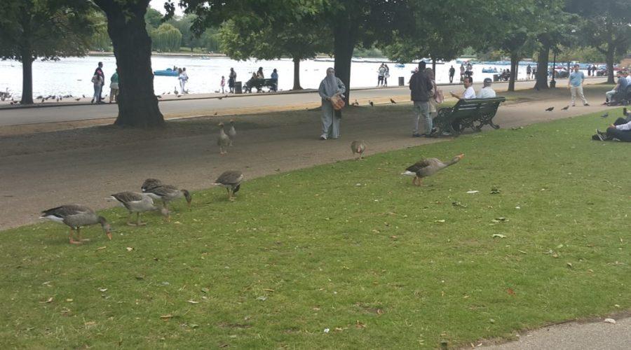 hyde-park-londyn