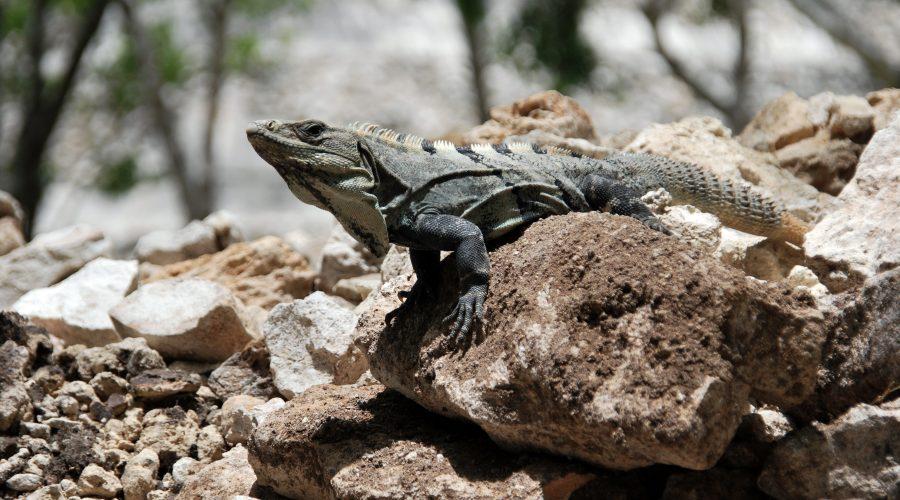 wycieczki jukatan meksyk