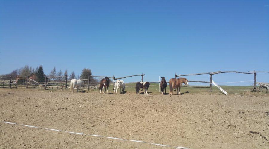 małopolskie stadniny koni