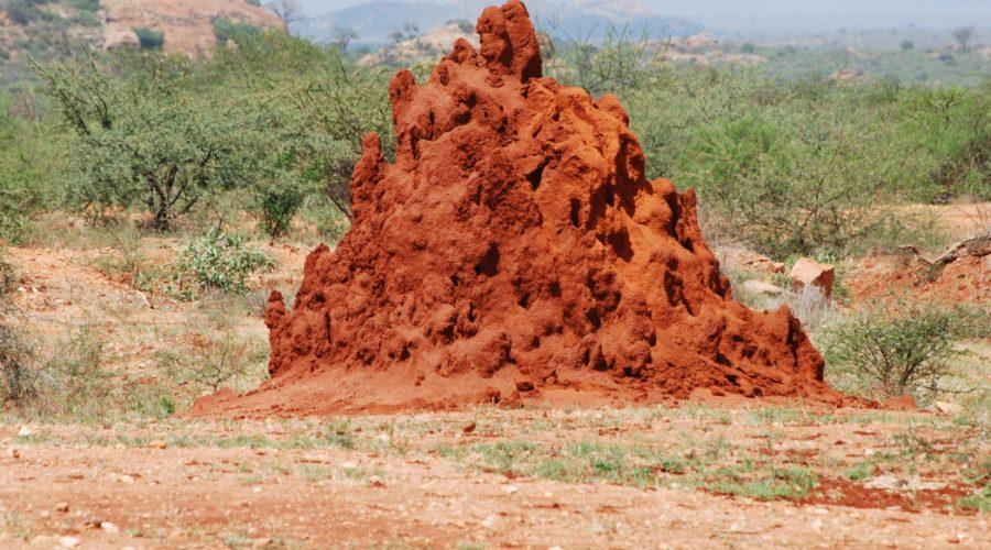 krajobrazy kenii