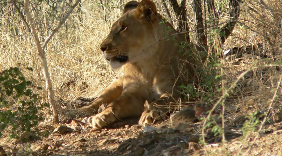 namibia wycieczki objazdowe