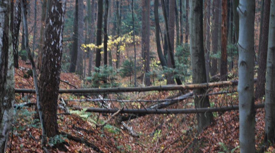 an autumn stroll through the Ojcowski National Park