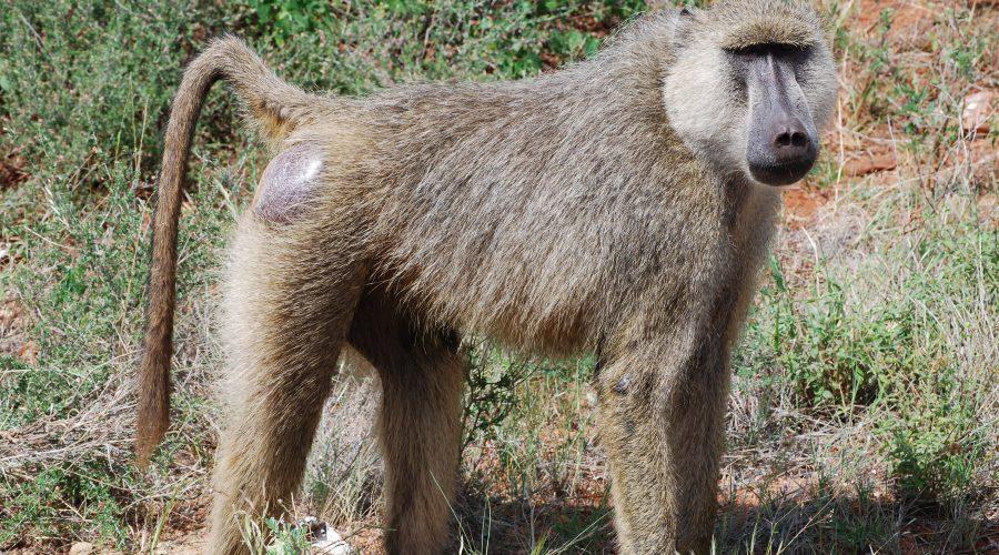 dobre safari kenia zwarszawy