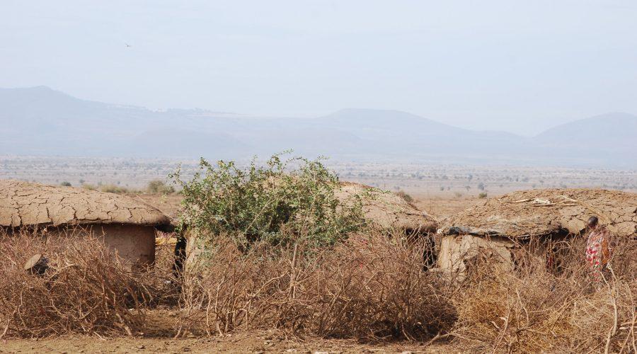 wioska Masajów wKenii wrejonie parku Amboseli zwiedzana podczas wykupionego safari wKenii zbiurem Rainbow