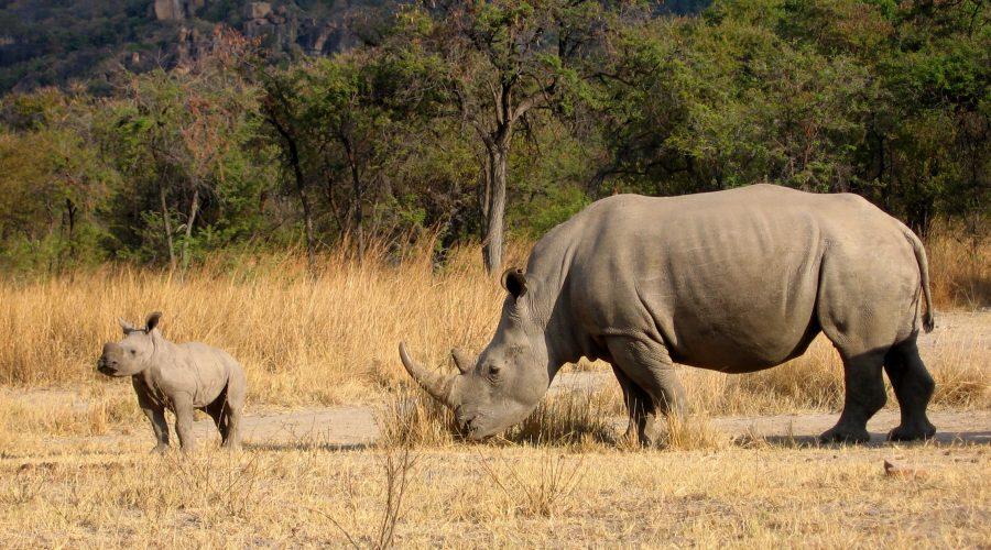 zimbabwe dobre wycieczki objazdowe