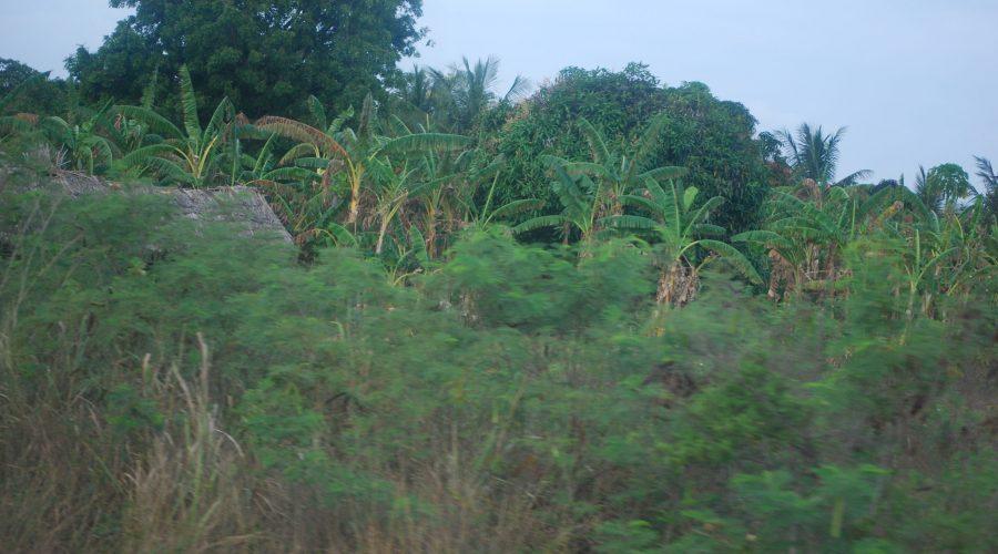 piękna roślinność Kenii oglądana wdrodzę nawyspę Wasini, wycieczki fakultatywnej wKenii
