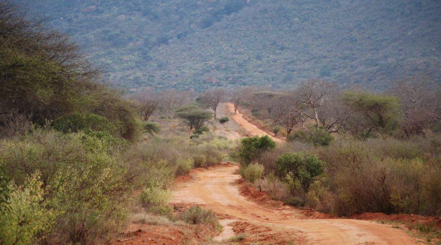 wycieczki safari kenia