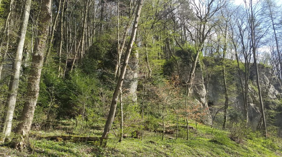 rocks hidden in the forest in the Polish Jura near toMaszkow